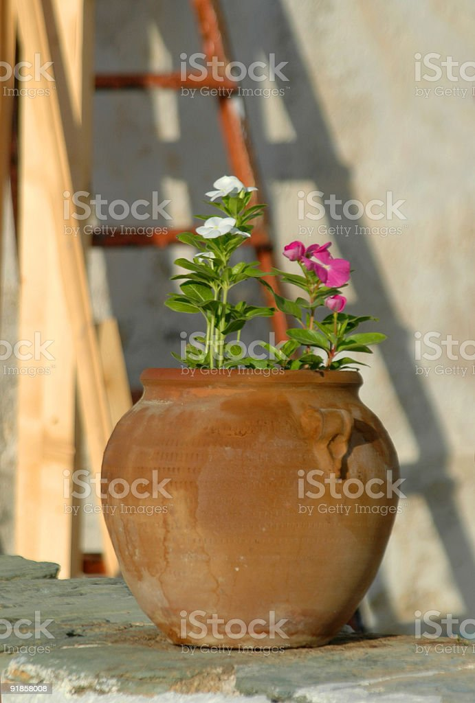 flowers in pot royalty-free stock photo