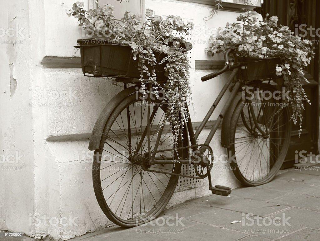 Flowers in retro bike royalty-free stock photo