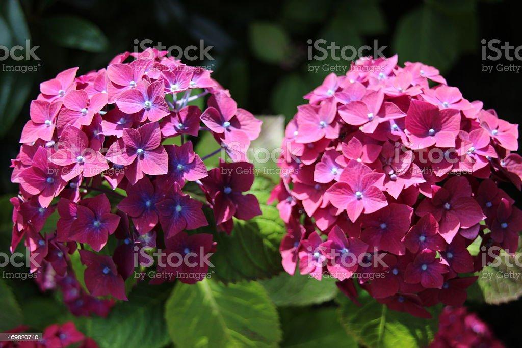 Flores en primavera foto de stock libre de derechos