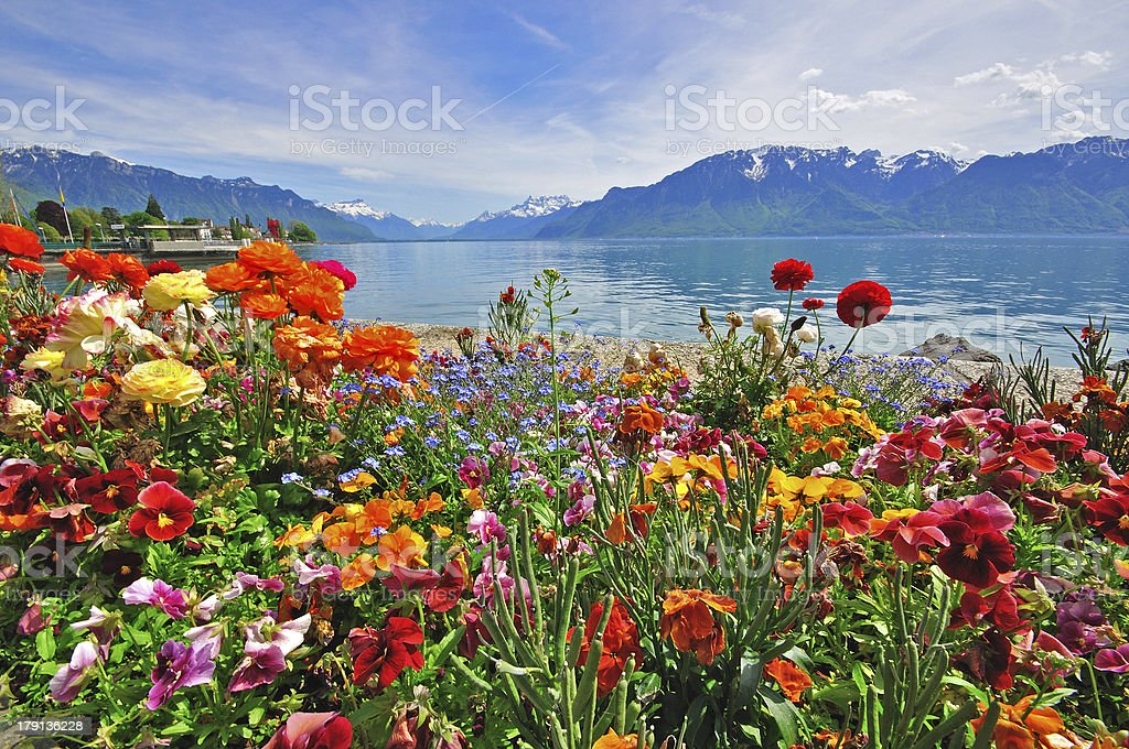 Flowers in swiss Alps royalty-free stock photo