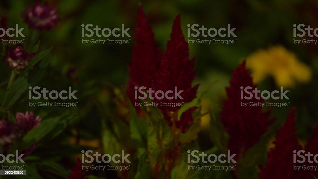 Flowers in Sydney Australia 4k stock photo