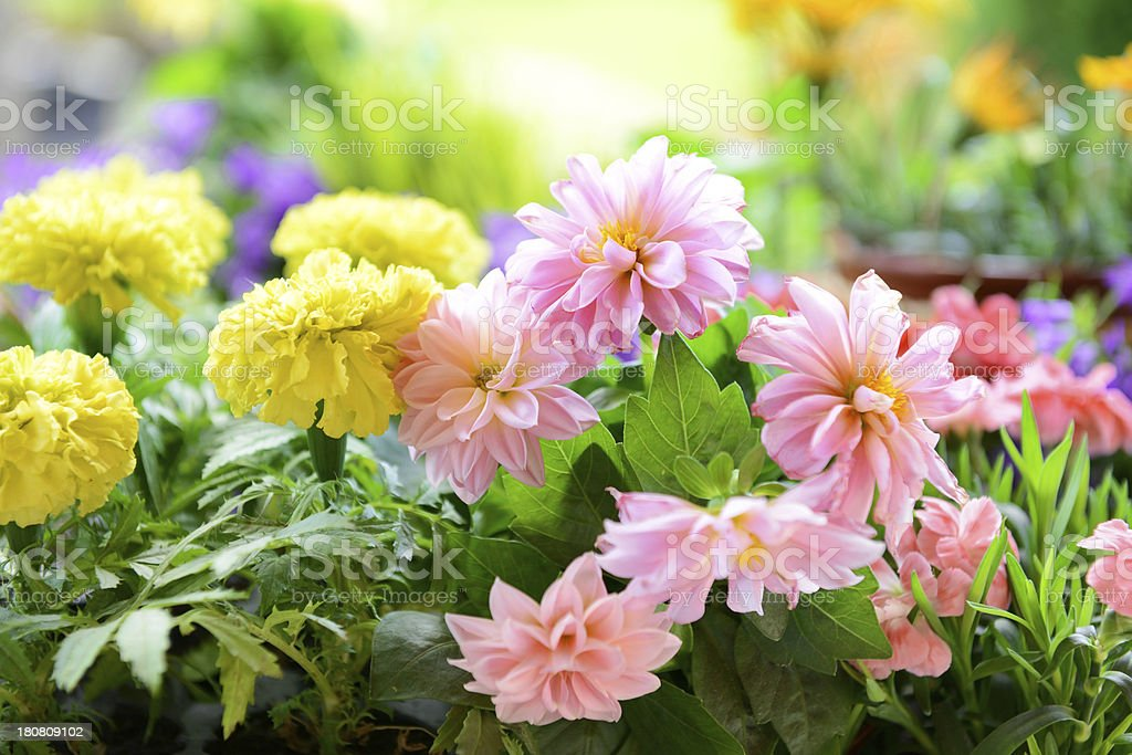 flowers in the garden royalty-free stock photo