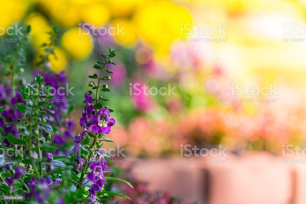 Flowers in the garden. stock photo