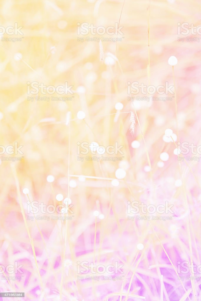 flowers in the garden soft blur background stock photo