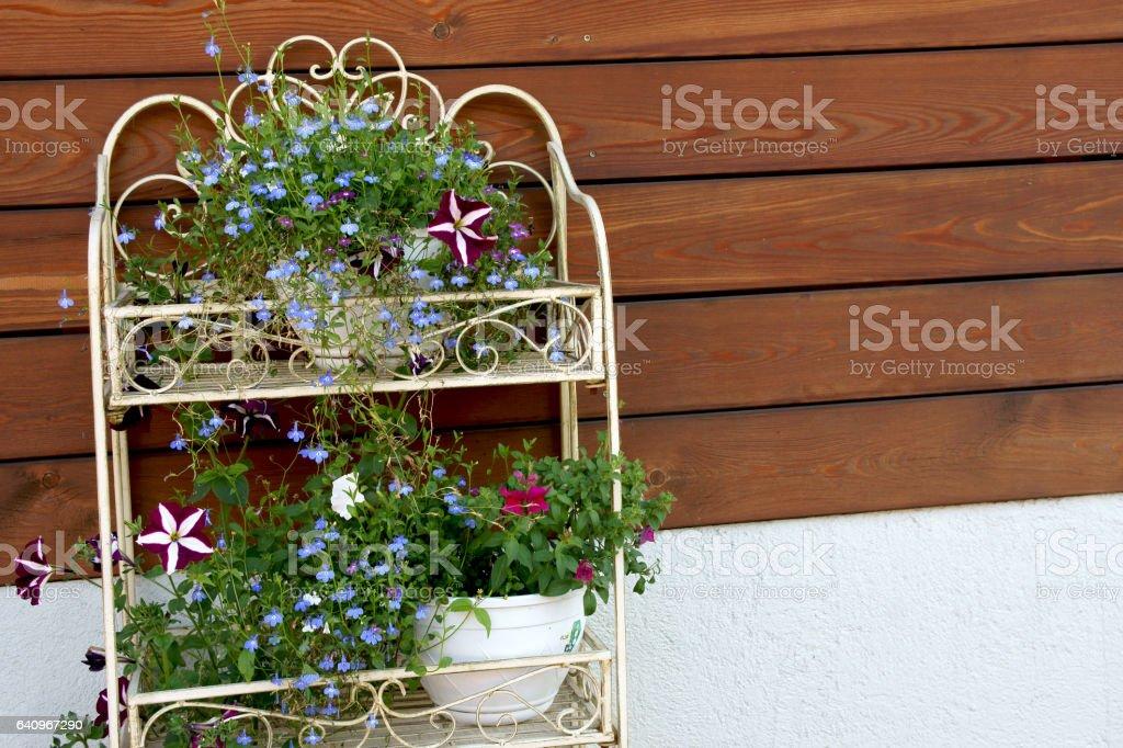 flowers in the garden whatnot stock photo