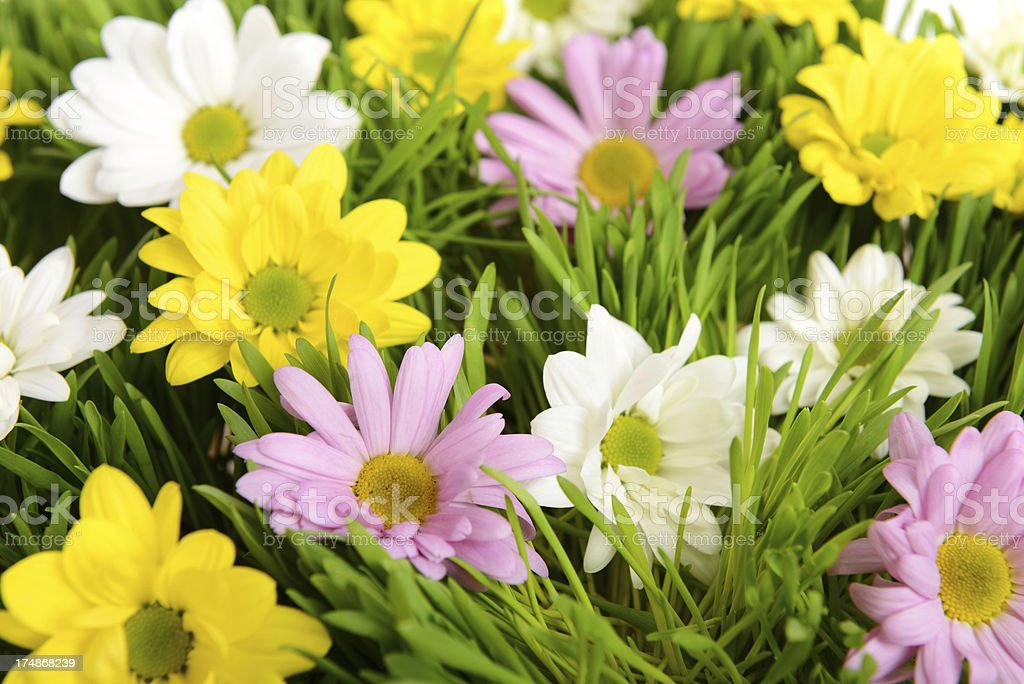 flowers in the grass royalty-free stock photo