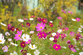 Flowers in the meadow. Autumn . Beautiful. Floral background.