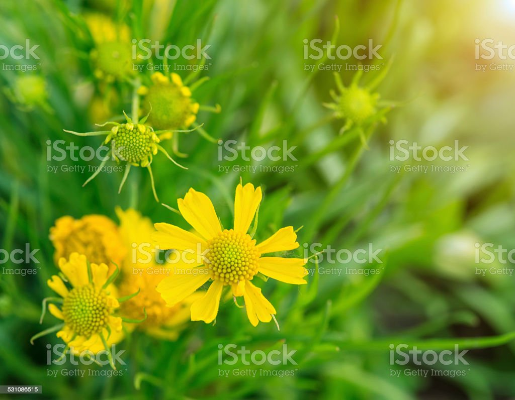 flowers in the meadow stock photo
