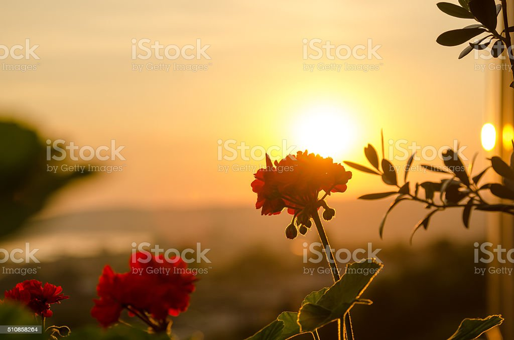 Flowers in the morning stock photo