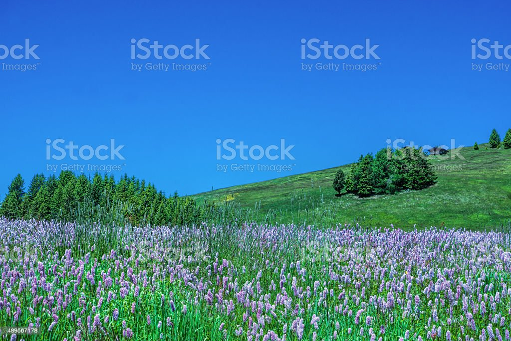 Flowers in the mountains stock photo