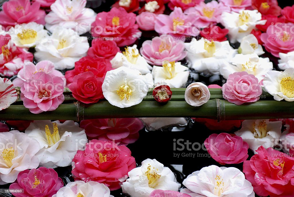 Flowers in water jar, Zen garden, Kyoto stock photo
