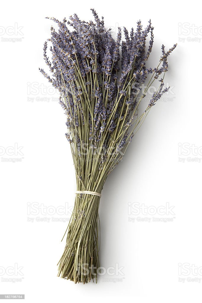 Flowers: Lavender royalty-free stock photo