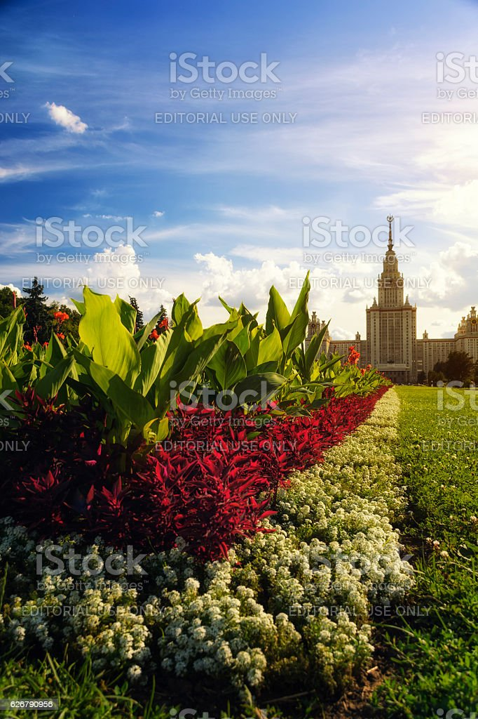 Flowers near Moscow State University stock photo
