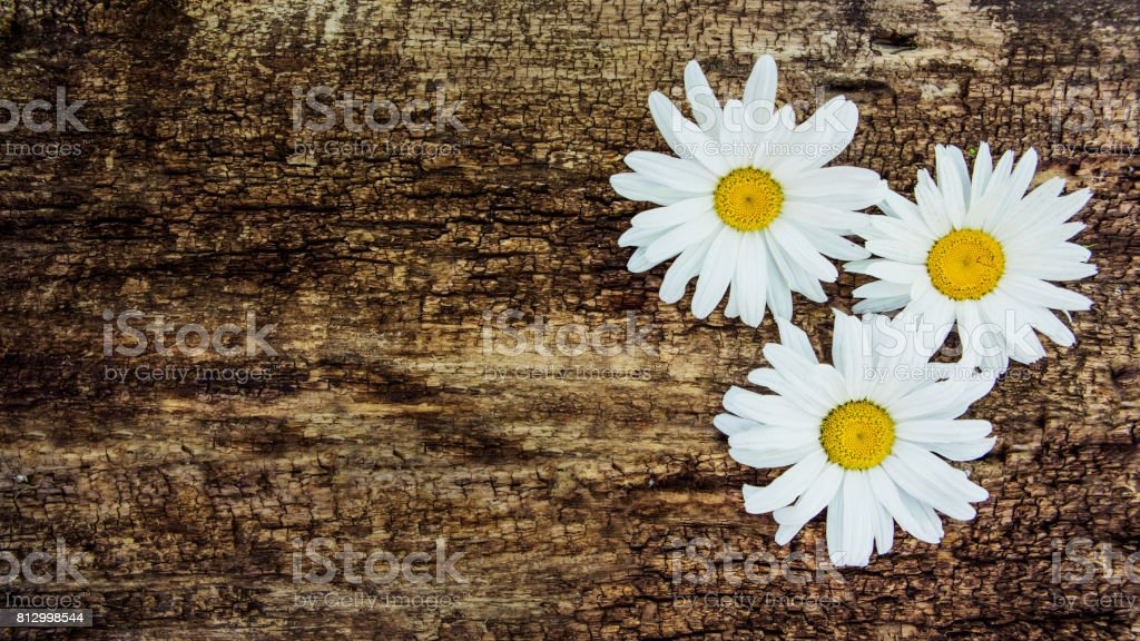 Flowers of chamomile on the background of a wooden table. With copy space stock photo