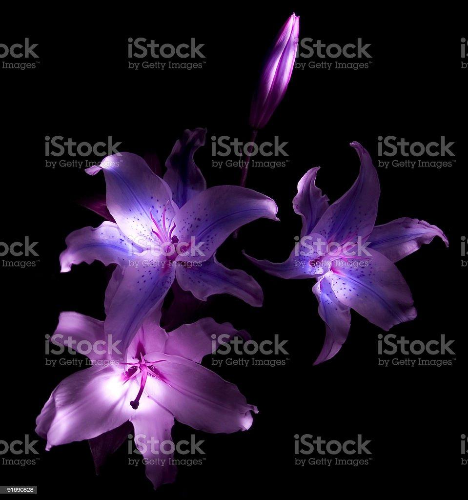 Flores de luz foto de stock libre de derechos