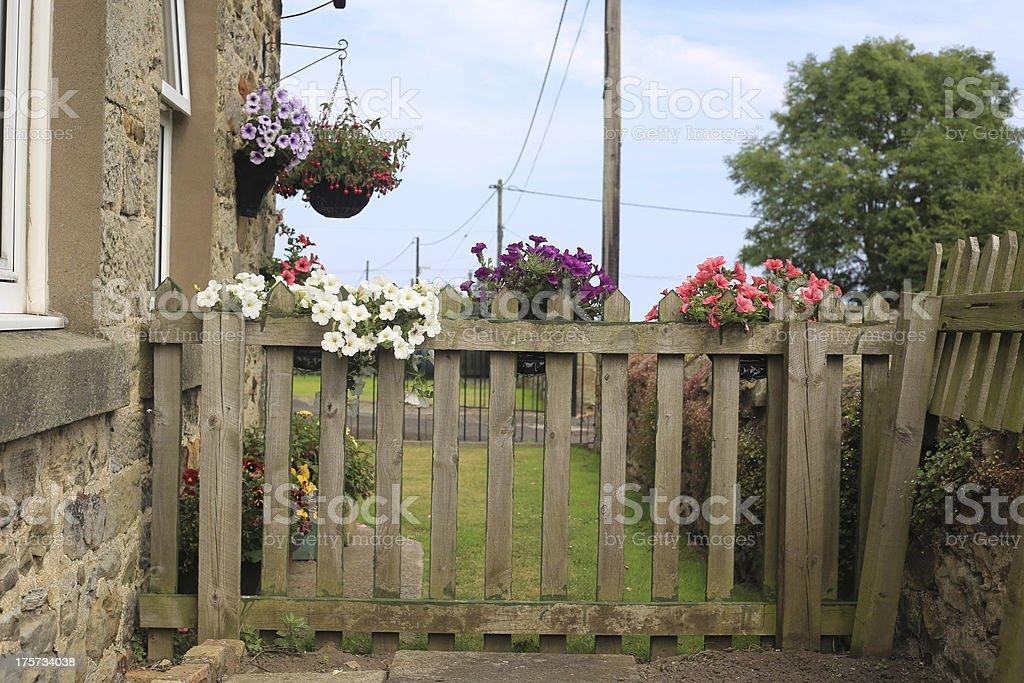 Flores en una valla foto de stock libre de derechos