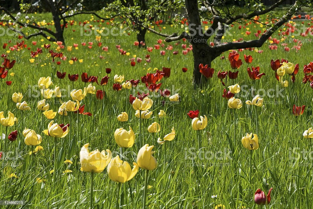 Flowers on a green field stock photo