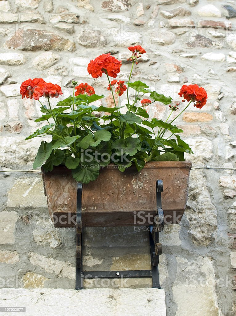 Flowers on a stonewall stock photo