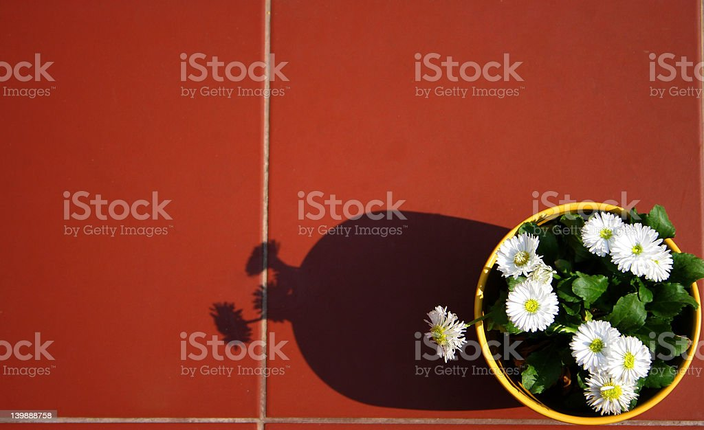 Flowers on a terrace stock photo
