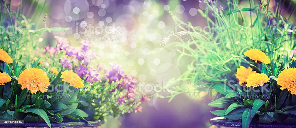 Flowers on blurred garden or park background, banner stock photo