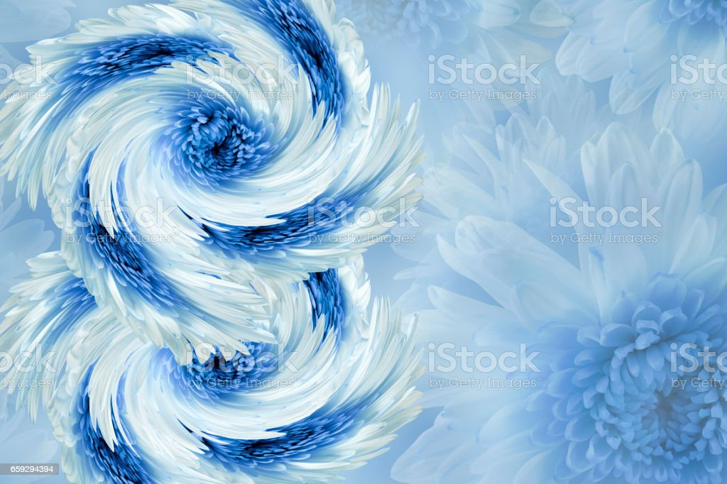 flowers on blurry white-blue background. Blue-white  flowers chrysanthemum.  floral collage.  Flower composition.  March 8.  Nature. stock photo