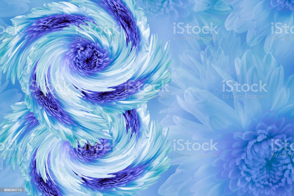 flowers on blurry white-blue-turquoise background. Blue-white-violet  flowers chrysanthemum.  floral collage.  Flower composition.  March 8.  Nature. stock photo