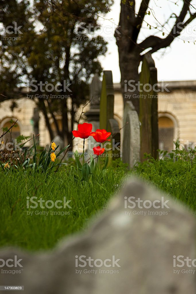 Flowers on grave royalty-free stock photo
