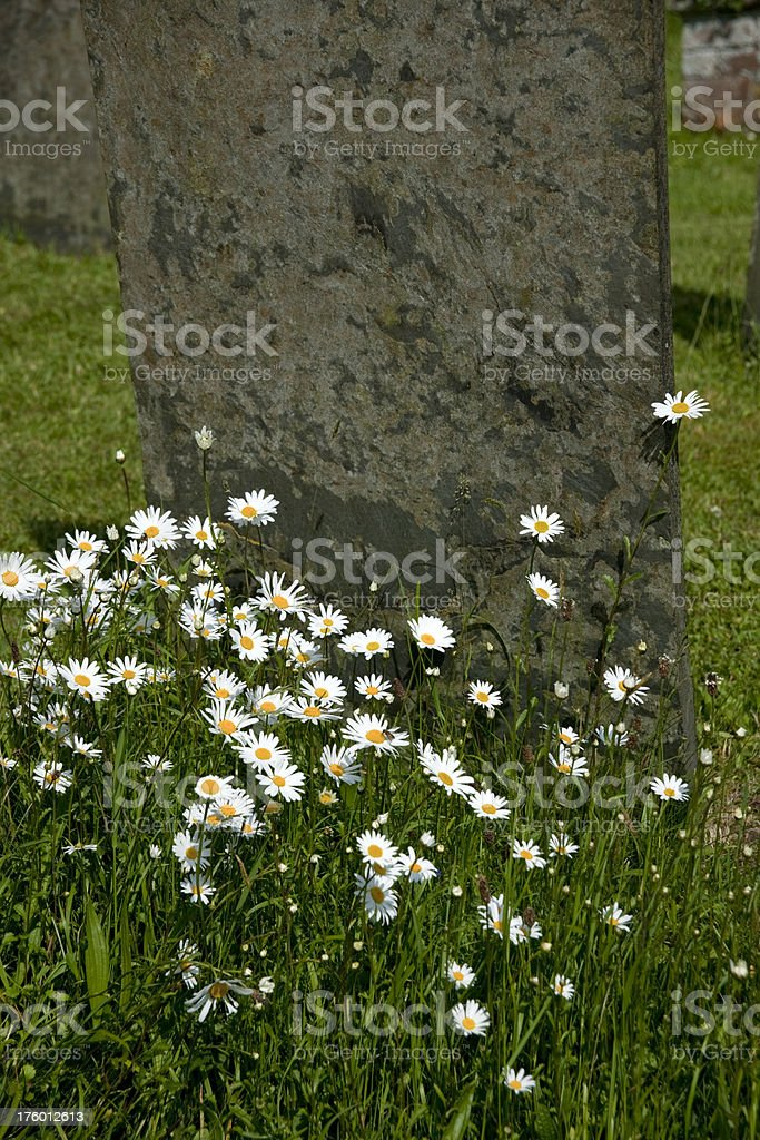 flowers on grave stock photo