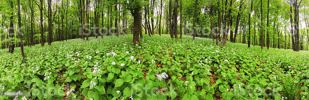 Flowers on green forest - 360 panorama stock photo