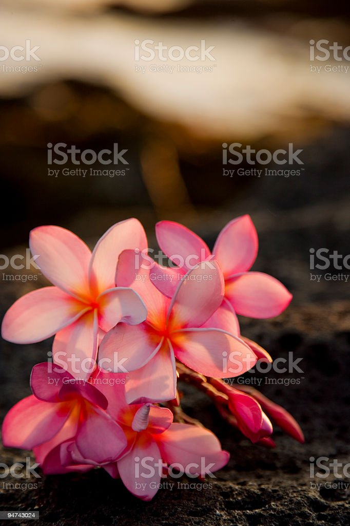 Flowers on Kauai Series stock photo