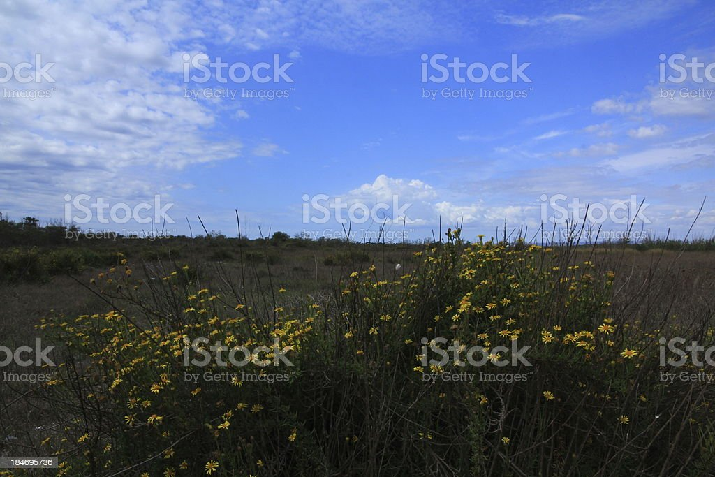 Flowers on land and cloudy sky royalty-free stock photo