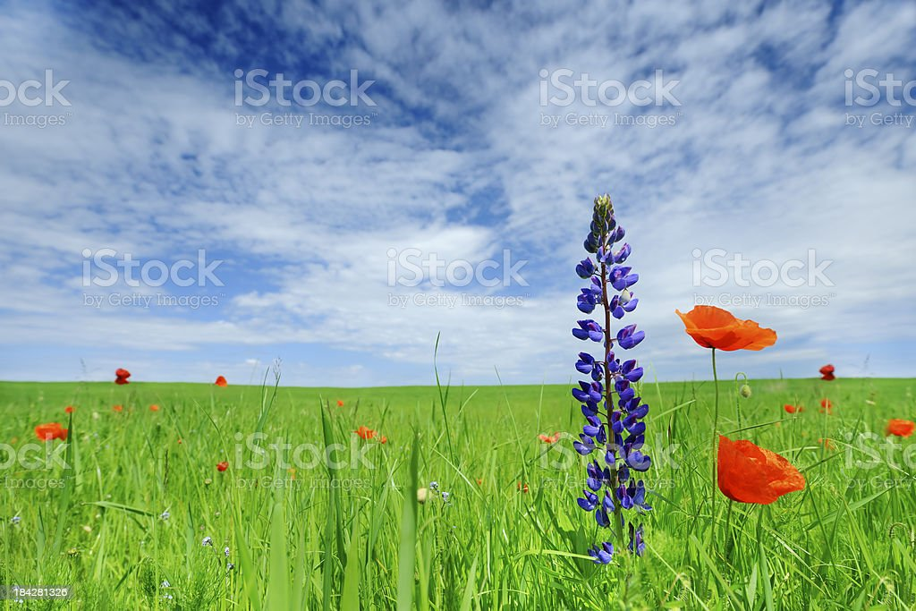 Flowers on meadow royalty-free stock photo