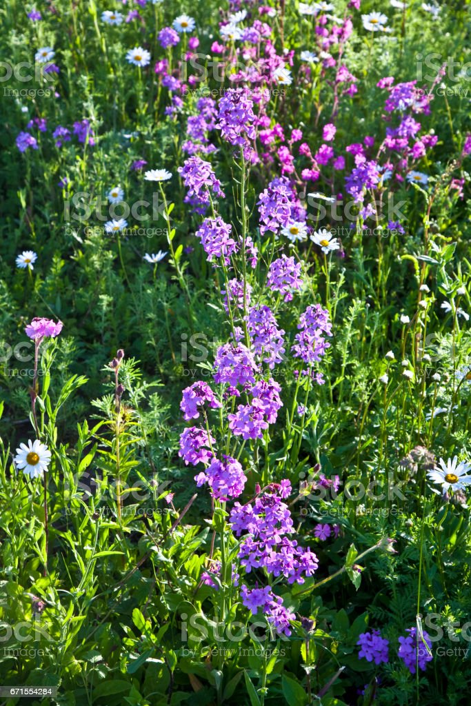 flowers on meadow stock photo
