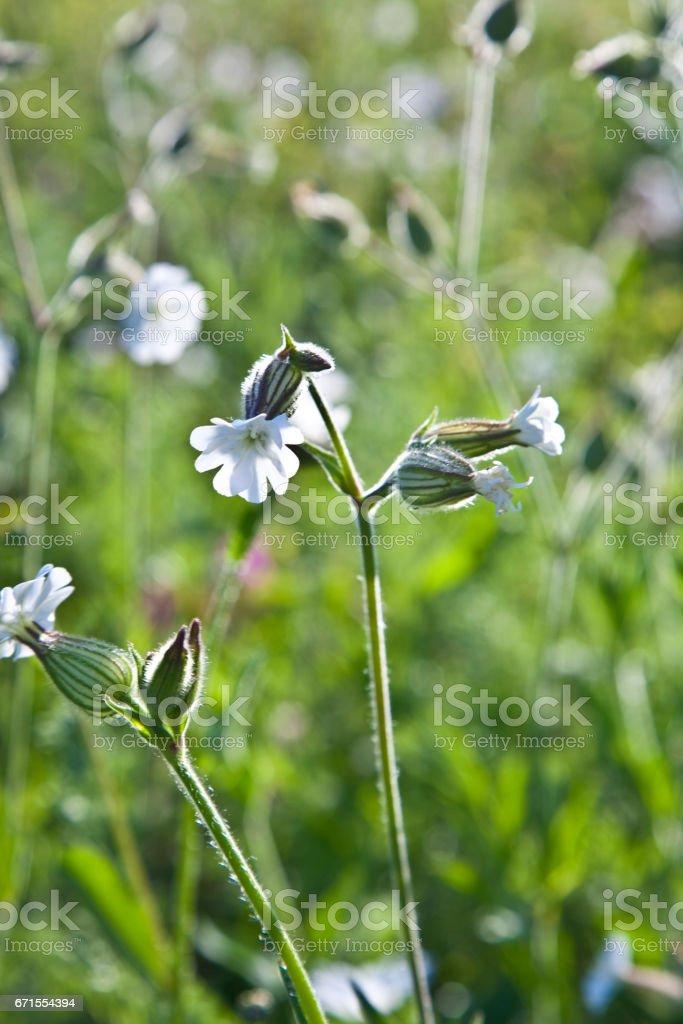 flowers on meadow stock photo