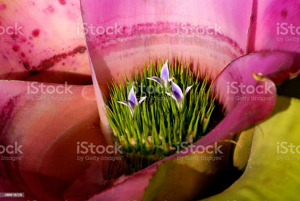 Flowers on Pink Orchid stock photo
