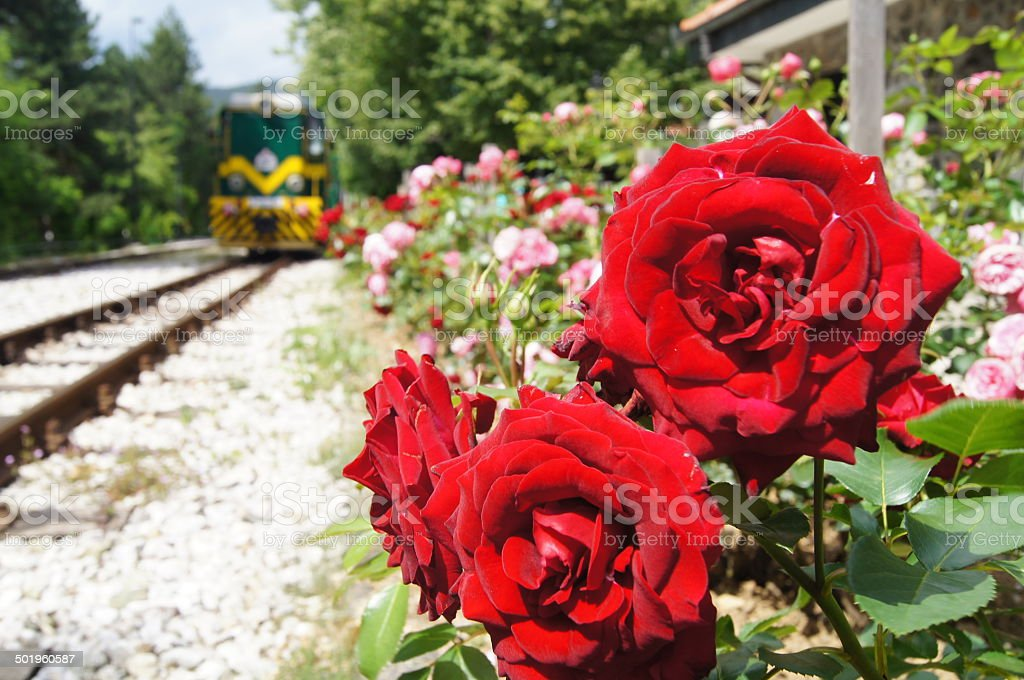 flowers on rail stock photo