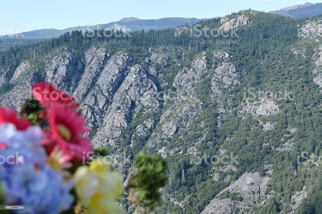 flowers on ridge stock photo