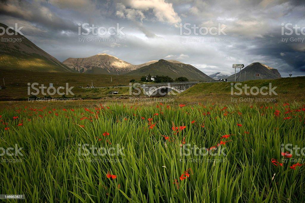 Flowers On Skye royalty-free stock photo