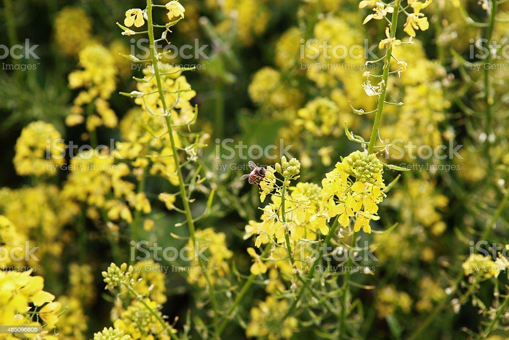 Цветы на bee Стоковые фото Стоковая фотография