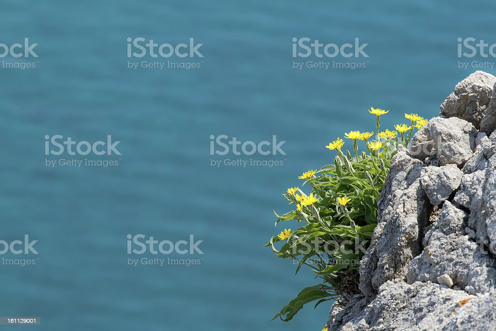 Flowers on the cliff stock photo