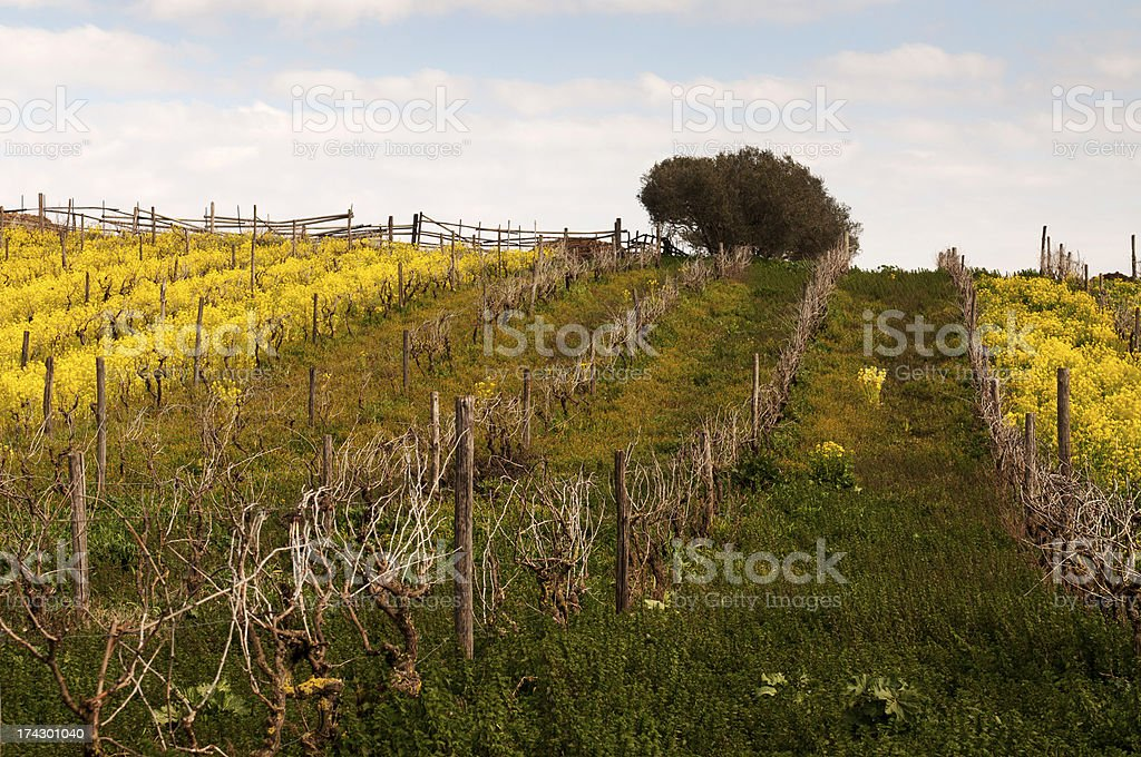 Flowers on the hill royalty-free stock photo
