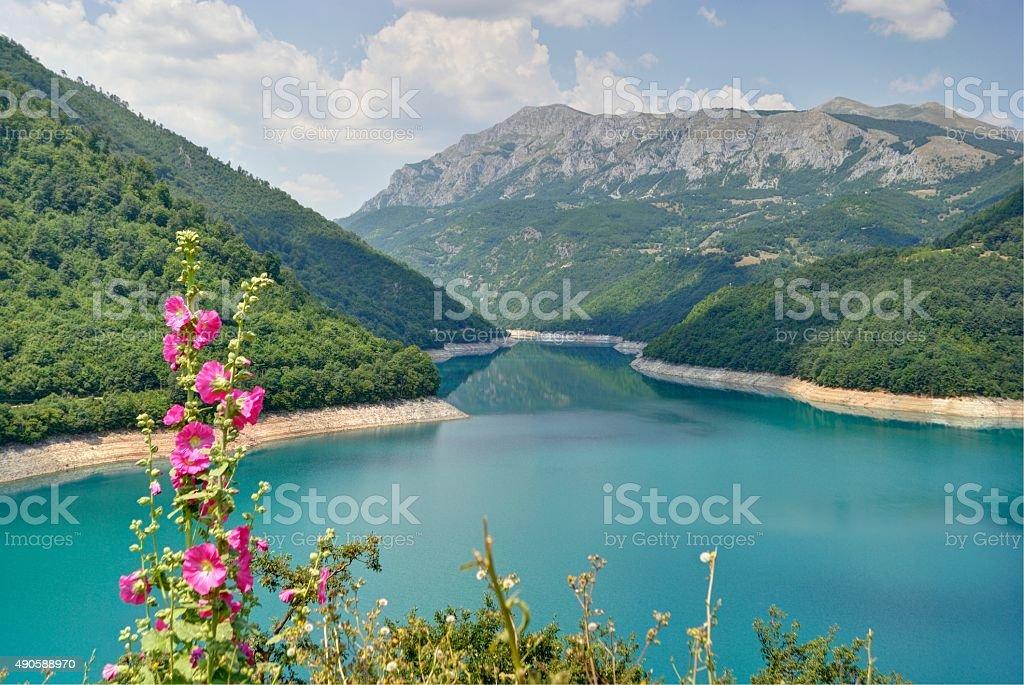 Kwiaty na Pivsko jezioro, Czarnogóra. zbiór zdjęć royalty-free