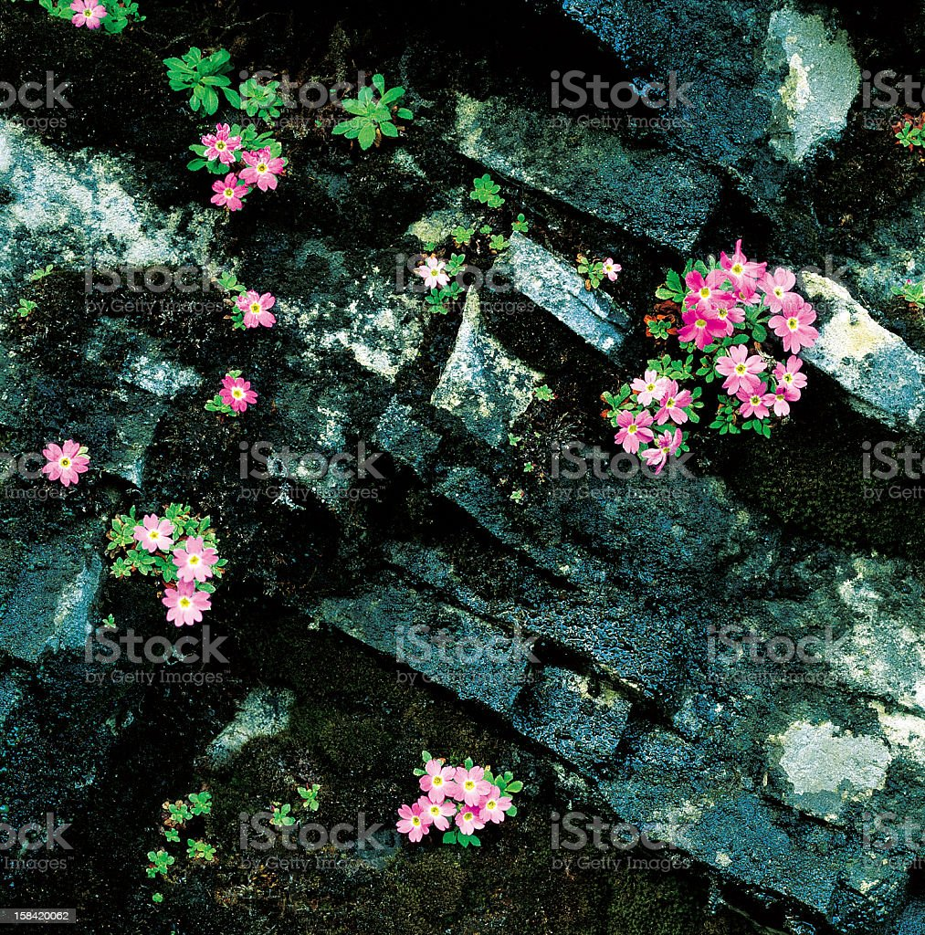 Flowers on the rock stock photo
