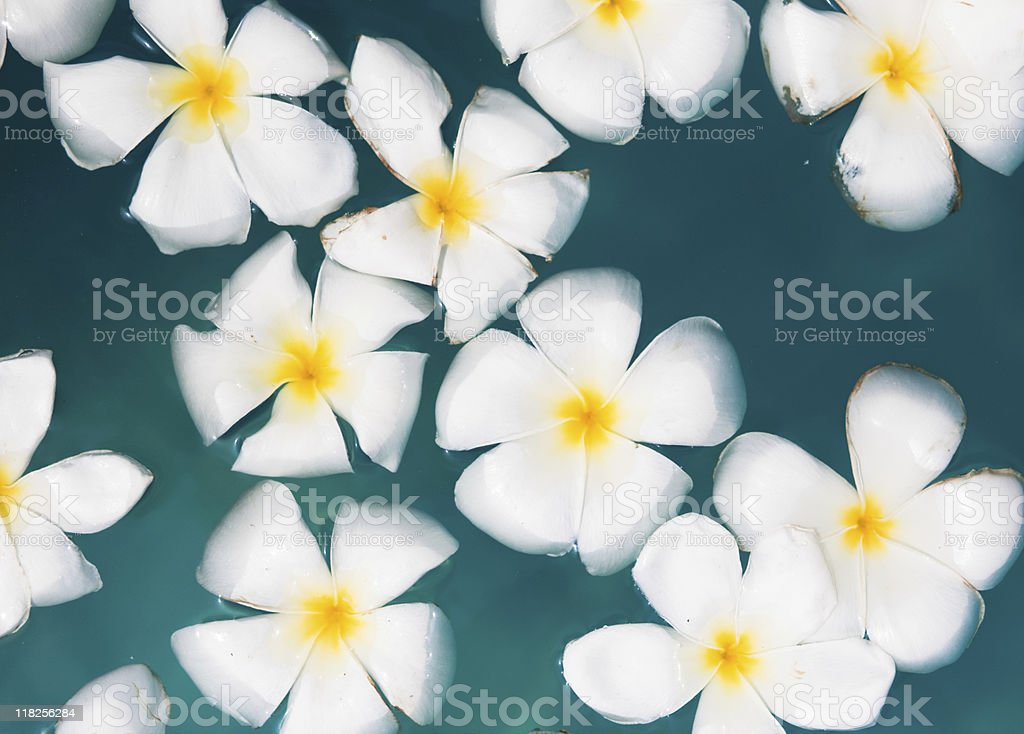 Flowers on the surface of water royalty-free stock photo
