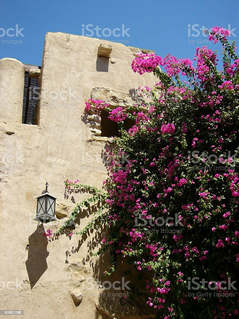 Flowers on the wall royalty-free stock photo