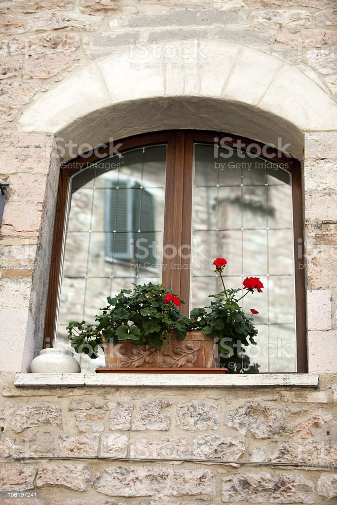 flowers on the window royalty-free stock photo