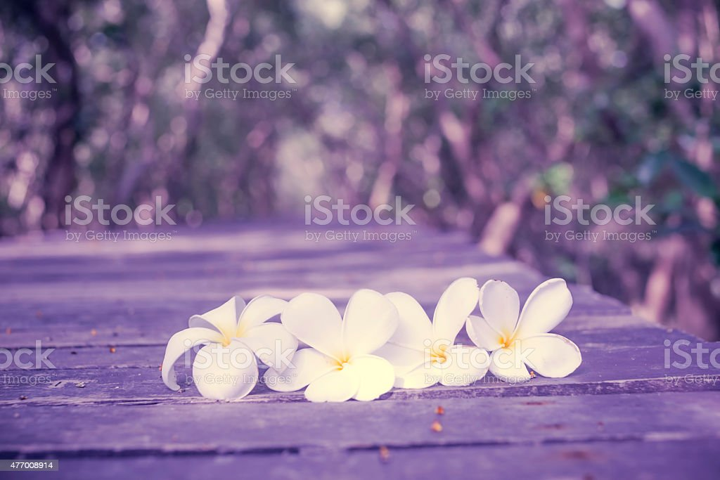Flowers on the wooden walkway in nature. royalty-free stock photo
