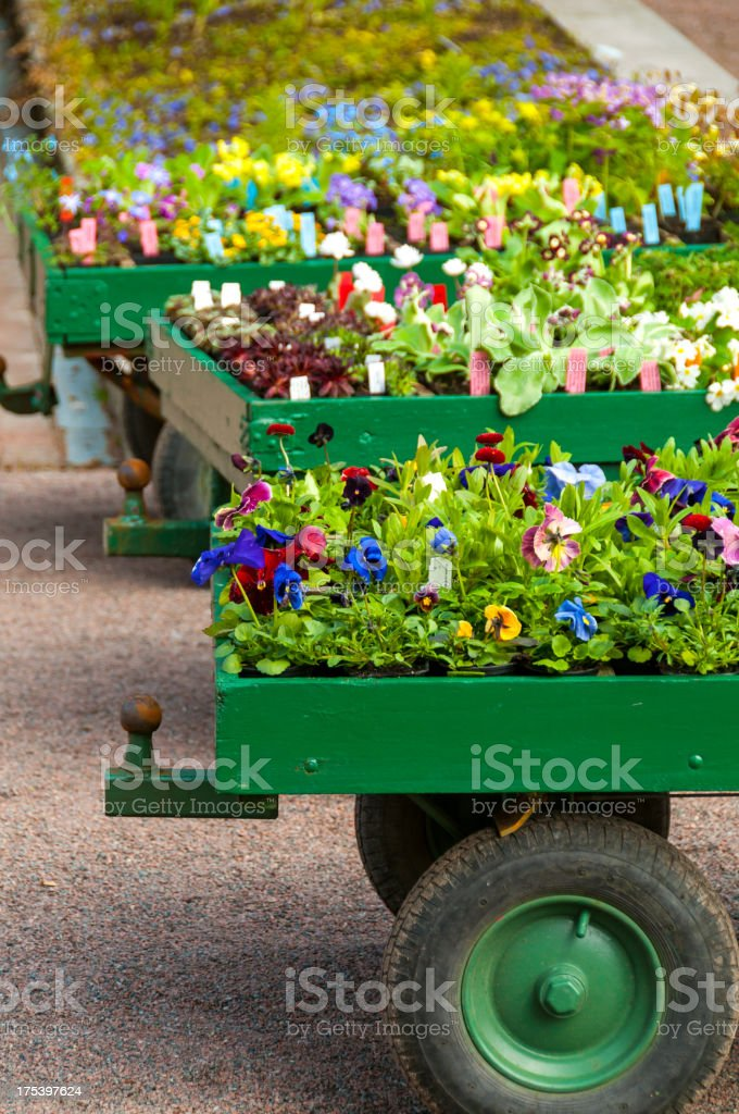 Flowers on wagons for sale royalty-free stock photo