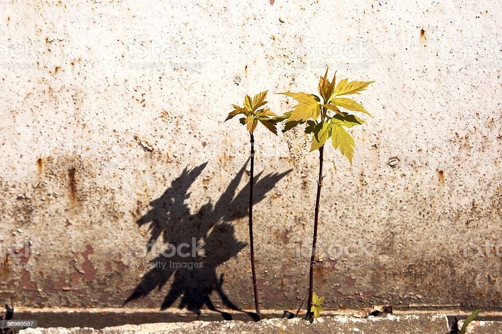 Flowers on wall royalty-free stock photo