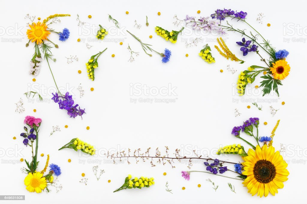 Flowers on white background. Top view, flat lay stock photo